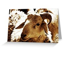 Big Sheep  Greeting Card