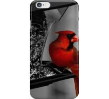 Cardinal at the feeder. iPhone Case/Skin