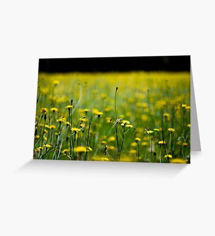 Daisy field Greeting Card