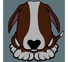 Dobby Ears Bull Terrier Brown  Photographic Print