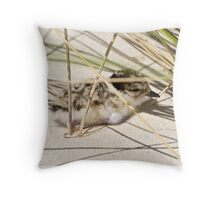 CRITTERS ~ Hooded Plover Throw Pillow