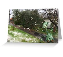 Scraggy Santa's helper and the snow  in the sun birds Greeting Card