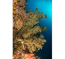 Green soft coral indonesian channel Photographic Print