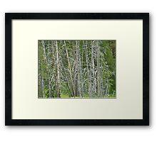 Where's the Leaves? Framed Print
