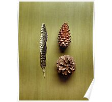 Three fell from a pine tree Poster