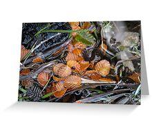 Fagus leaves in a small pool, Hanson's Track, Cradle Mountain,Tasmania. Greeting Card