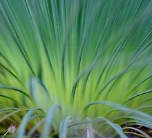 Soft Grass Tree  by Carole-Anne