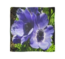 Two Blue Mauve Anemone - Close Up Windflowers Scarf