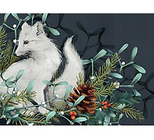Arctic Fox Holiday Portrait Photographic Print