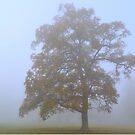 Tree on a misty morning by crashbangwallop