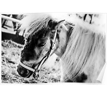 Imposed; a horse in BW Poster