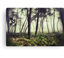 Mystery woodlands Canvas Print