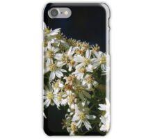 Olearia haastii (Daisy Bush)  iPhone Case/Skin