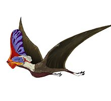Tapejara, a genus of Brazilian pterosaur from the Cretaceous Period. by StocktrekImages