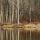 Across Skymount Pond - Autumn Browns by MotherNature