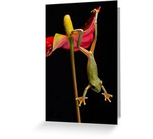 Maroon Eyed Tree Frog Greeting Card