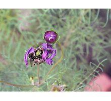 violeta Photographic Print