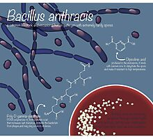 Bacillus anthracis Photographic Print