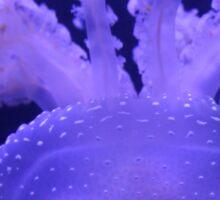 Atlanta, GA: Jellyfish Sticker