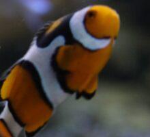 Atlanta, GA: Clownfish Sticker