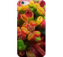 Poinsetta iPhone Case/Skin