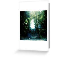 Sunlight on Merri Creek Greeting Card