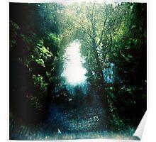 Sunlight on Merri Creek Poster
