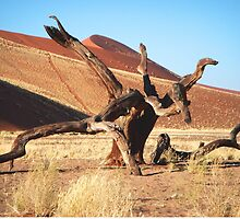 Dead tree Sossusvlei, Namibia, Africa by Margaret  Hyde