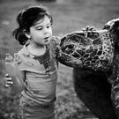 Hello turtle by KerrieMcSnap