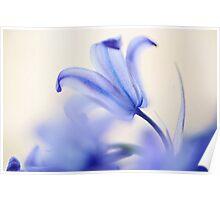 Blue Light. The Wild Hyacinth Poster