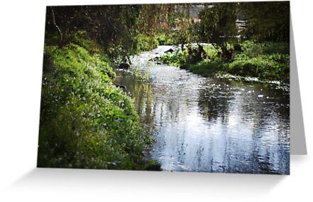 Merri creek in spring by KerrieMcSnap