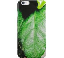 Close-up of a ordinary leaf iPhone Case/Skin