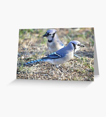 Jays Greeting Card