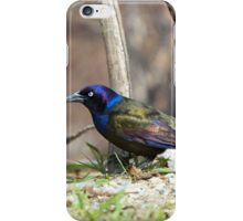 Colorful Grackle iPhone Case/Skin