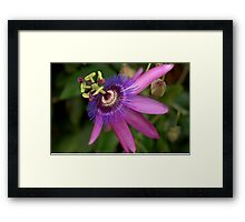 Flowered Architecture Framed Print