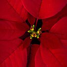 Merry Christmas by alan shapiro