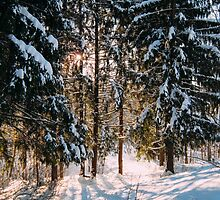 The Real Winter II by denis-romanov