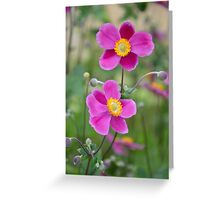 Pink anemone flowers Greeting Card