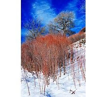 Winter in Colorado Photographic Print