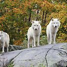Three Looking At Me by Vicki Spindler (VHS Photography)