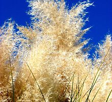 """""""Cat Tails"""" by Carter L. Shepard by echoesofheaven"""