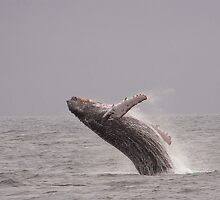 Whale in Galapagos island by FireBlade87