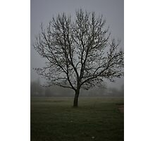 Foggy Tree Photographic Print