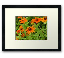"""Daisies"" by Carter L. Shepard""  Framed Print"