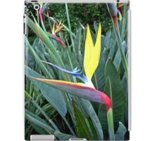 Strelitzia Mandela, South Africa iPad Case/Skin
