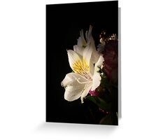 Morning Bloom Greeting Card
