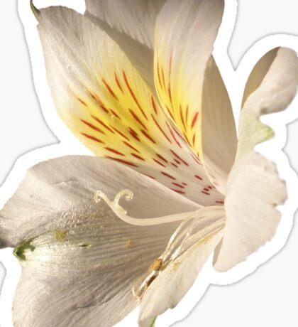 Morning Bloom Sticker