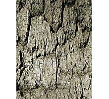 Oak Bark  Photographic Print