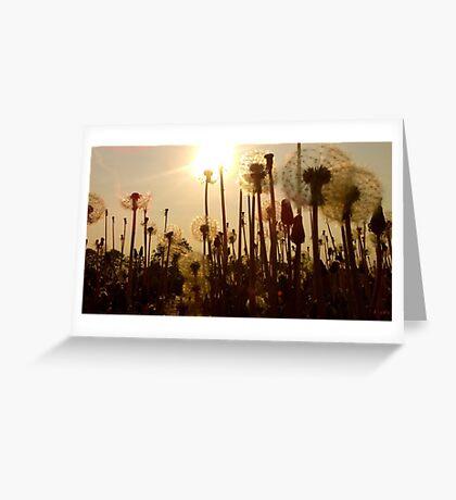 Dandelion Eclipse Greeting Card