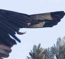 Big Bird Flight Sticker